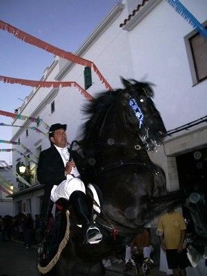 Menorca - Menorquín horse ridden by caixer at festes