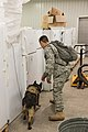 Military working dog and handler practice explosives detection 140729-A-BD610-021.jpg