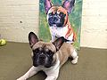 Milton the Dog with his portrait by Pricasso.jpg