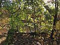 Minnehaha Park in autumn 11.jpg