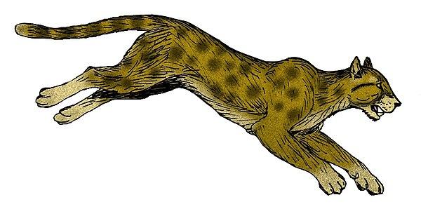 Amerikanische Geparden - Wikiwand