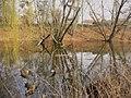 Moewensee - Volkspark Rehberge - geo.hlipp.de - 34997.jpg