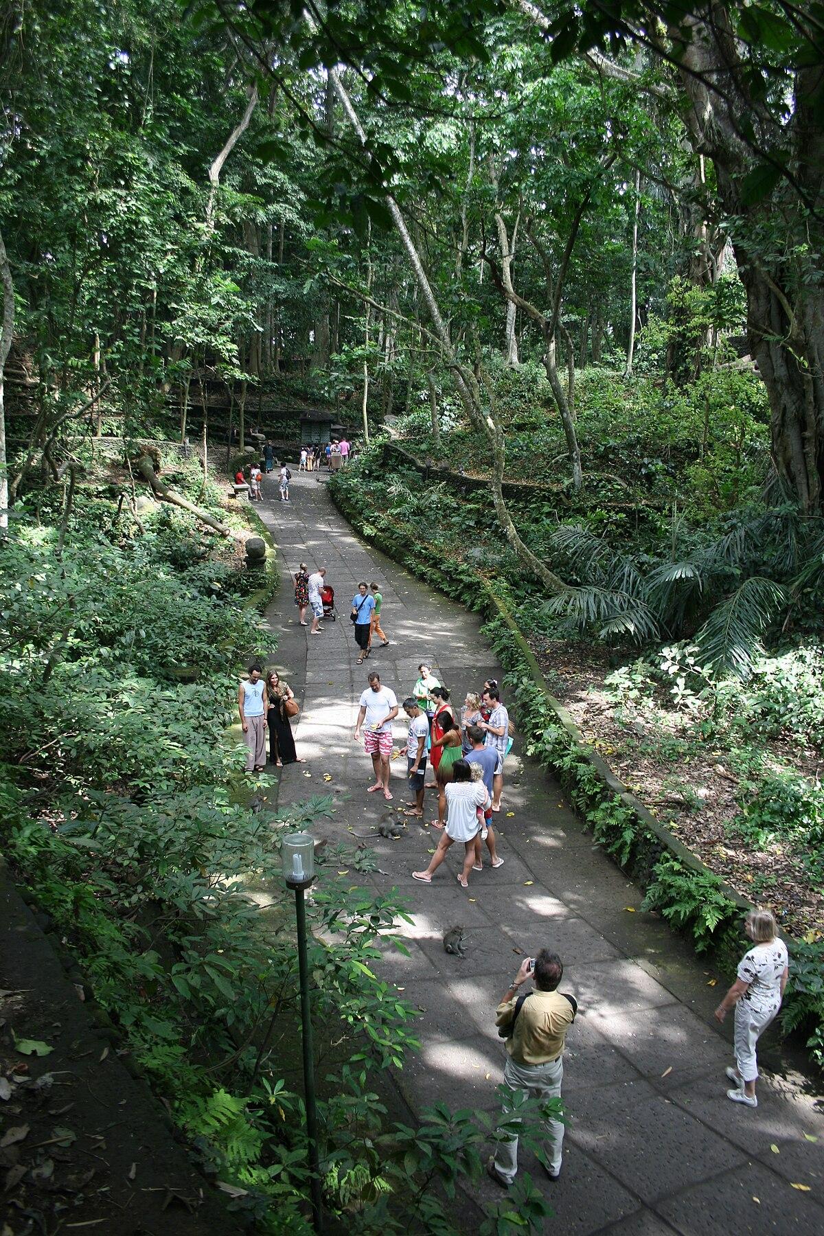 Ubud Monkey Forest Wikipedia