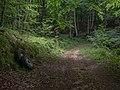 Montes de Vitoria - Hayedo y ruedas 01.jpg