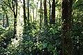 Monteverde Reserve Costa Rica 01.jpg