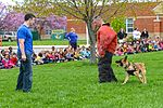Month of Military Child MWD demonstration 150414-F-OH119-217.jpg