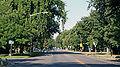 Montview Boulevard.JPG