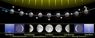 Lunar phase - The phases of the Moon as viewed looking southward from the Northern Hemisphere. Each phase would be rotated 180° if seen looking northward from the Southern Hemisphere. The upper part of the diagram is not to scale, as the Moon is much farther from Earth than shown here.