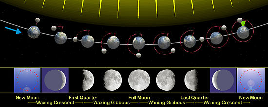 The monthly changes in the angle between the direction of sunlight and view from Earth, and the phases of the Moon that result, as viewed from the Northern Hemisphere. The Earth–Moon distance is not to scale.