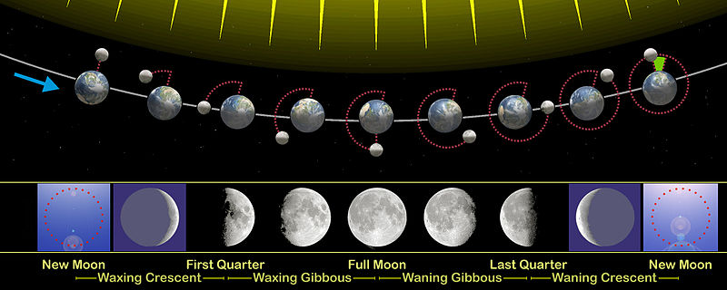 Lunar phase - Wikipedia