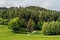 Moosburg Hohenfeld Wiesen-und Wald-Landschaft 07052018 5834.jpg