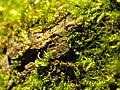 Moss (233950057).jpeg