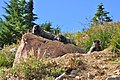 Mount Rainier - September 2017 - Hoary marmots 38.jpg