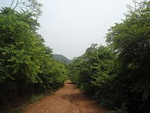 Photograph of a walkway through a forest