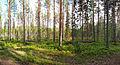 Muurame forest.jpg