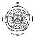 Myrtus communis flowerdiagram.png