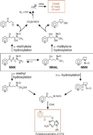 N-Nitrosonornicotine