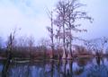 NRCSMD91004 - Maryland (4559)(NRCS Photo Gallery).tif
