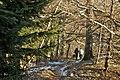 Na szlaku - panoramio (4).jpg