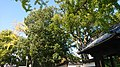 Nagoya 20201112-04.jpg