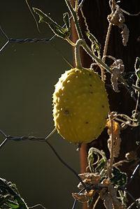 Nara fruit