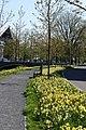 Nassausingel Breda P1360714.jpg