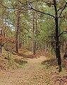 Nationaal Park Drents-Friese Wold. Locatie Dieverzand 005.JPG