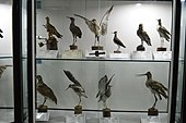 Natural History and Technology Museum of Shiraz University Darafsh (10).JPG