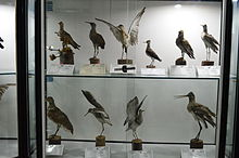 Natural History and Technology Museum of Shiraz University Darafsh (10).JPG