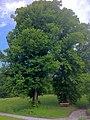 Naturdenkmal Zwei Linden - Ebbs 2.JPG