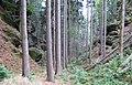 Nature reserve Pavlinino udoli (006).jpg