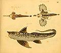 Naturgeschichte in Bildern mit erläuterndem Text (Taf. XII) (6058656679).jpg
