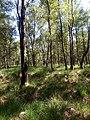 Naturschutzgebiet Holmmoor bei Quickborn 02.jpg