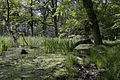 Naturschutzgebiet Lanken bei Loissin.jpg