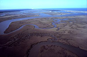 Winyah Bay - Aerial view of north inlet of Winyah Bay National Estuarine Research Reserve