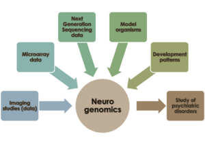 Neurogenomics - Areas of focus in neurogenomics. This figure highlights the different sources of data and areas of research that guide the field of neurogenomics.
