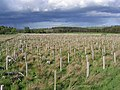 New tree planting - geograph.org.uk - 427593.jpg