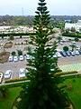 Nice tree perspective - panoramio.jpg