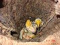 Ninho de Tucanos 1.jpg