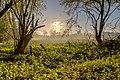 Nordkirchen, Naturschutzgebiet Ichterloh -- 2018 -- 2131-7 (2).jpg