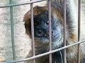 Oaklawn Farm Zoo, May 16 2009 (3539707430).jpg