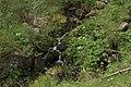 Oasi valtrigona Rio Valtrigona2.jpg