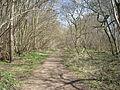 Old Down Wood 05.JPG