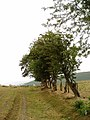 Old Hedgerow - geograph.org.uk - 206788.jpg