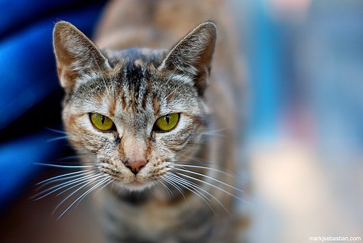 Hidden Dangers of Cat Feces And Ways To Prevent Them – We Add Up