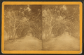 Orange Avenue.,St. Augustine, from Robert N. Dennis collection of stereoscopic views.png