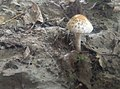 Orange mushroom like umbrella.jpg