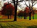 Orchard - panoramio (5).jpg
