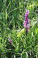 Orchidées sauvages protégées.jpg