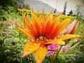 Orngflower.jpg